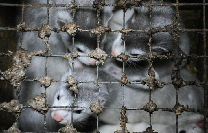 SIGN: Ban Cruel Mink Fur Farming in the US For Good