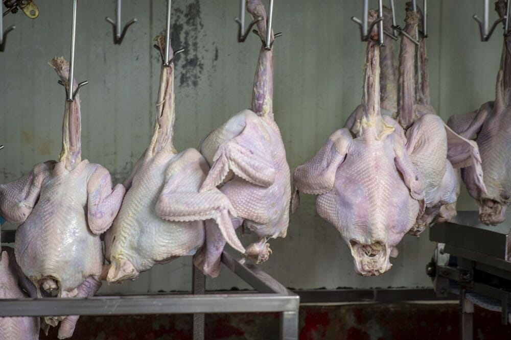 poultry processing line
