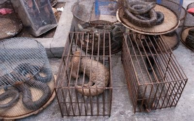 Wild Animal Consumption Falling Out of Favor in China, Study Finds