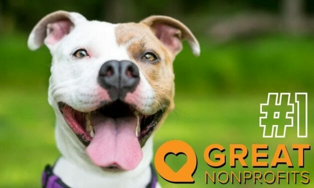 Lady Freethinker Rated Number 1 Animal Charity in the US on GreatNonprofits!