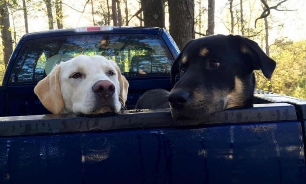 SIGN: Justice for Dogs Poisoned and Shot in Face with Shotgun