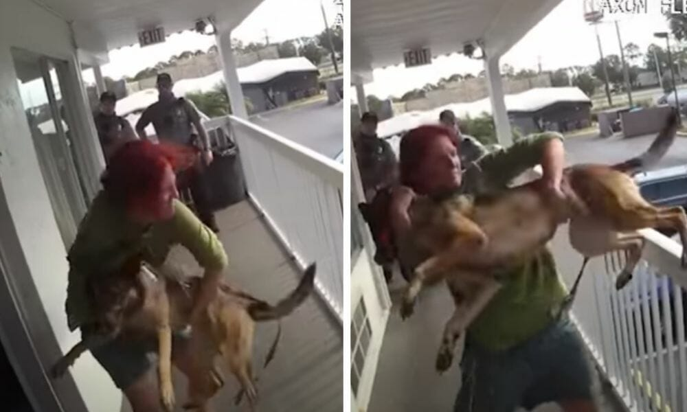 SIGN: Justice for German Shepherd Thrown Off Motel Balcony