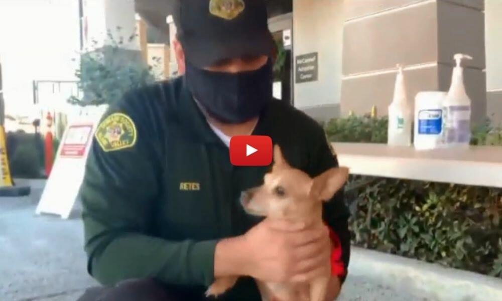 officer holding dog