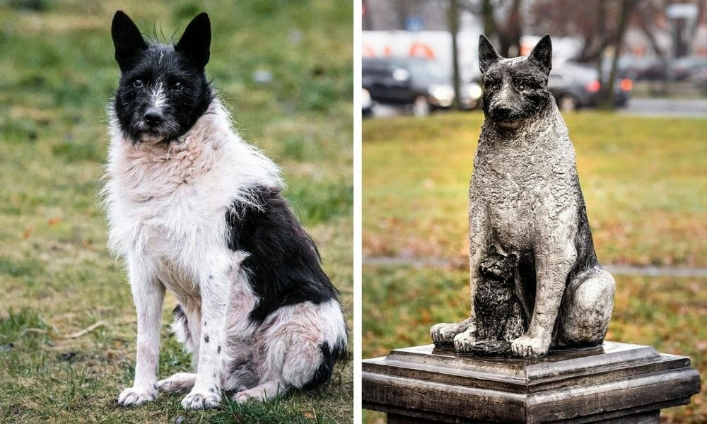 A Beloved Stray Dog Will Be Immortalized in Estonia with New Statue Honoring His Life
