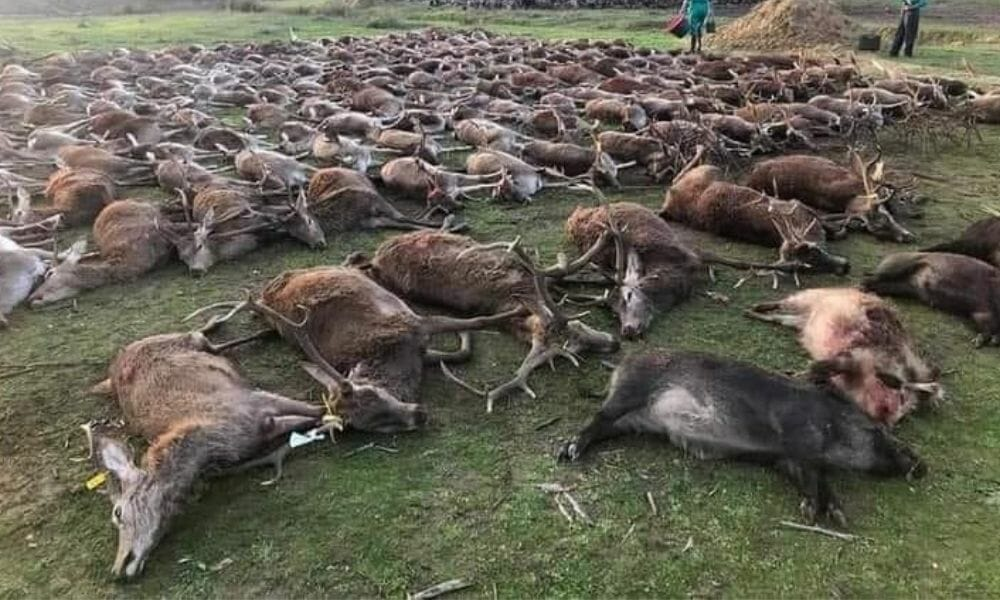 "SIGN: Justice for 500 Wild Animals Massacred at Fenced-In ""Hunt"""