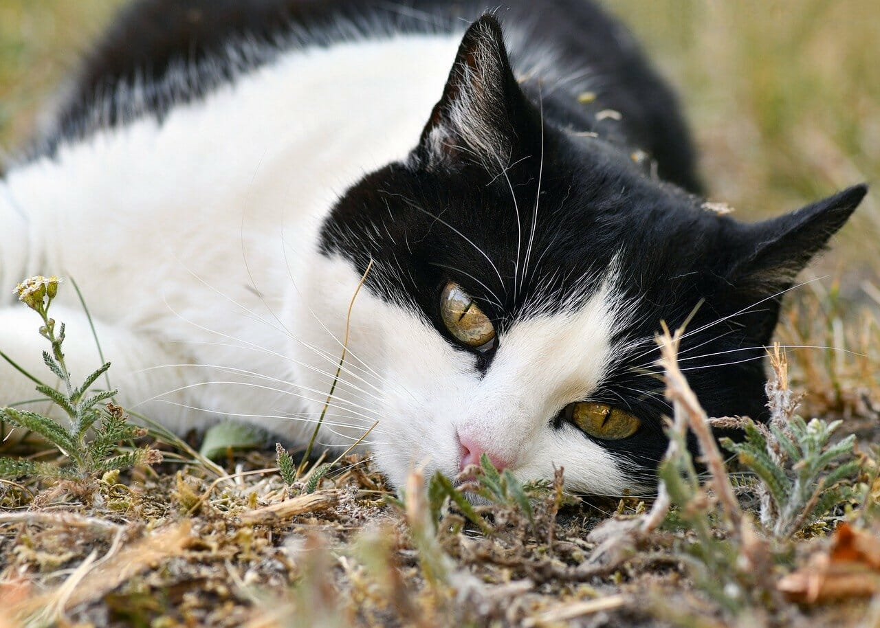 sad cat outside