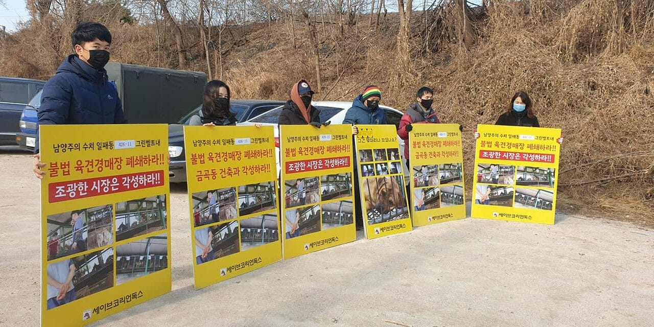 UPDATE: LFT Partner Blocks Dog Meat Trucks From Cruel Auction House