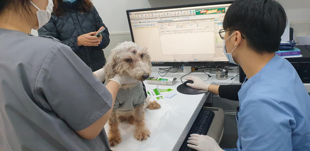 dog rescued from Nakwon auction house
