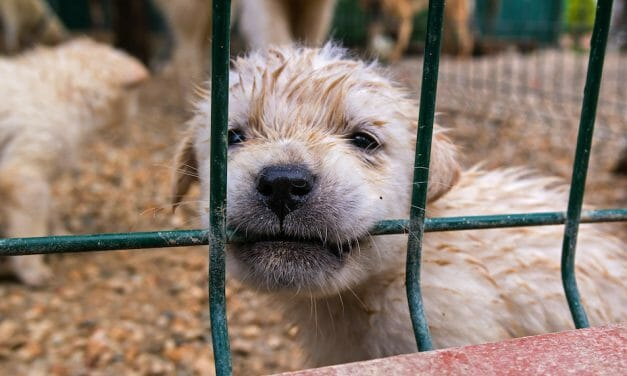 UPDATE: Puppy Mill Ban in Washington State Now Signed Into Law