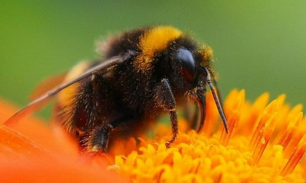 This New Study Will Help You Make Your Garden 'Pollinator-Friendly' for the Bees