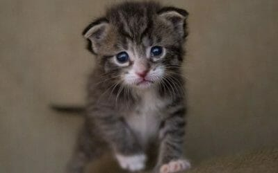 SIGN: Justice for Kitten Decapitated With Pocket Knife