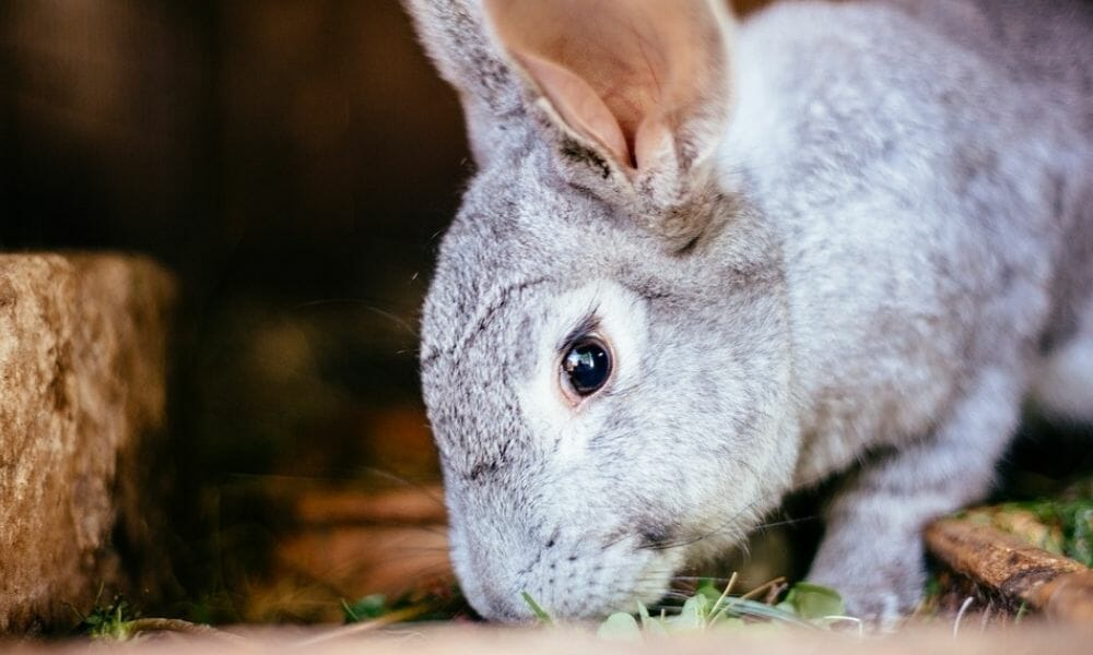 China Will No Longer Require Cruel Cosmetics Testing on Animals