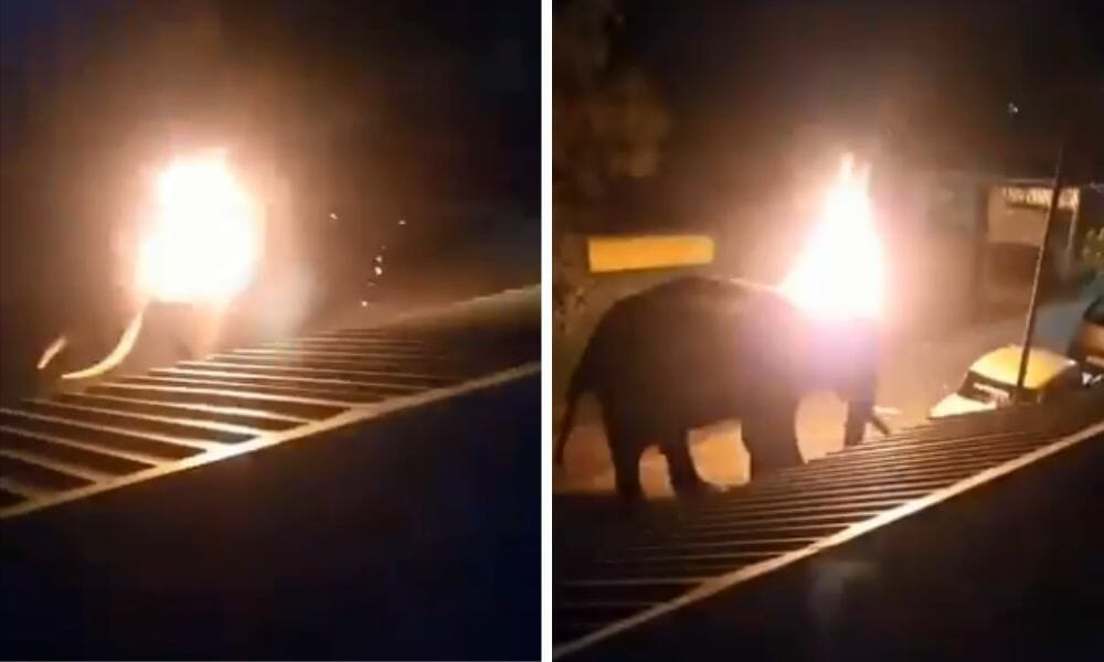 SIGN: Justice for Elephant Brutally Set On Fire Just for Wandering Onto Property
