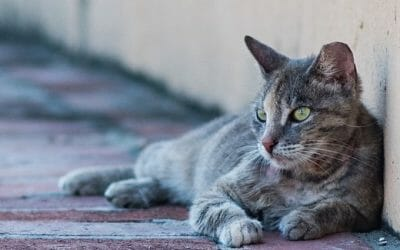 Los Angeles Finally Ends 10-Year Ban On Trap-Neuter-Release for Feral Cats