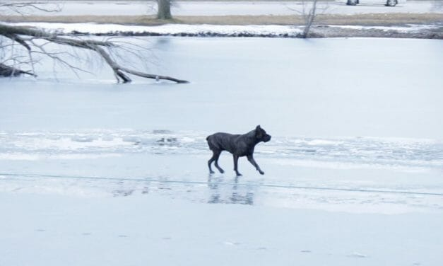 VIDEO: Dog Miraculously Runs Across Icy River to Safety In Harrowing Rescue