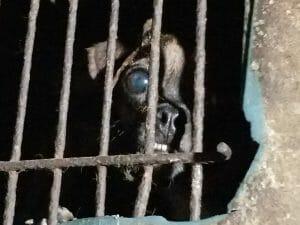 Pasado's rescue