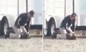 officer punches dog