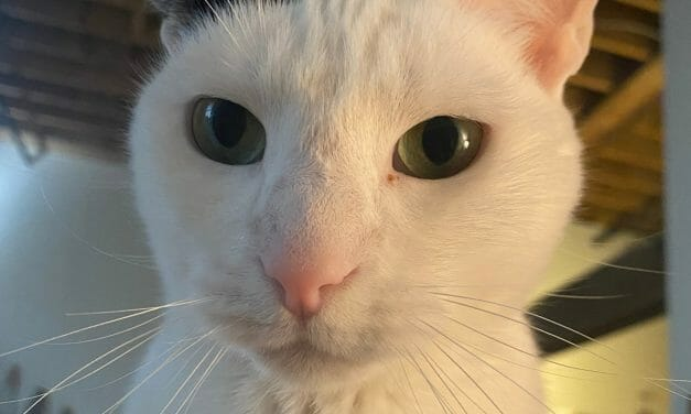 Cat Lost During Nashville Christmas Bombing Reunites With Guardian