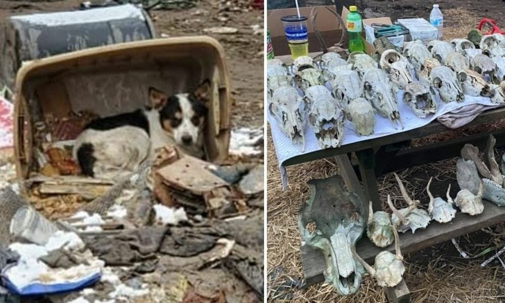 SIGN: Justice for 200 Dogs Living Among Corpses at 'Boneyard' Puppy Mill
