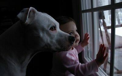 animal and child abuse