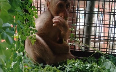 UPDATE: Indonesian YouTuber Who Tortured Captive Monkeys FINED and JAILED