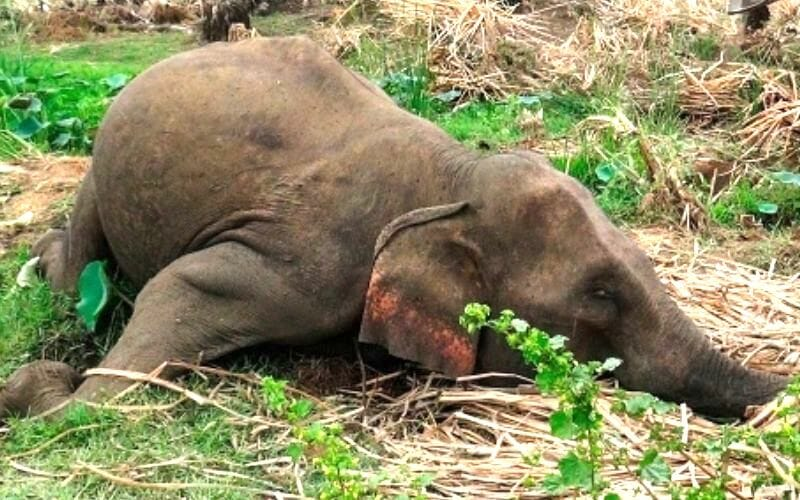 SIGN: Justice for Elephant Gunned Down, Tusks Hacked Off by Poachers