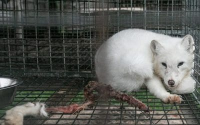 SIGN: Ban the Sale of Cruel Animal Fur in Oregon