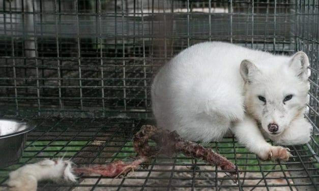 SIGN: Ban the Sale of Cruel Animal Fur in Oregon
