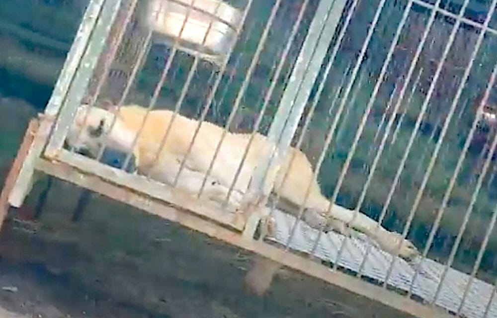 SIGN: Pass New Bill to Ban S. Korea's Brutal Dog Meat Trade