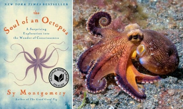 Sy Montgomery's Thought-Provoking Book Explores the Underwater World of Octopus Consciousness