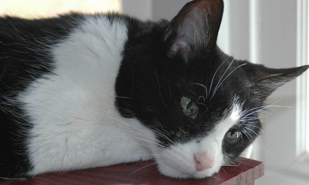 SIGN: Justice for Tuxedo the Cat, Knocked Out of Tree and Mauled to Death