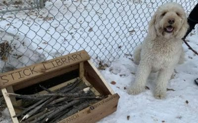 An Adorable 10-Year-Old Boy Is Building 'Stick Libraries' for Dogs to Play with at Parks