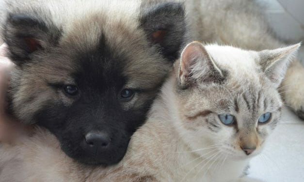 SIGN: Justice for Dog and Cat Killed, Bodies Burned to Ashes
