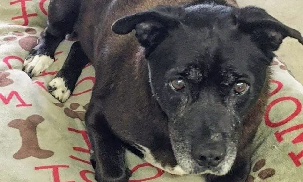 Wiggles the Dog Finally Finds a Forever Home After 11 Years in Shelter