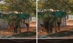 men beating elephant