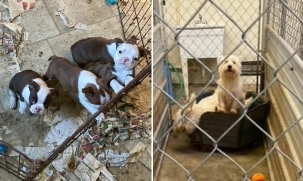 SIGN: Justice for Puppy Mill Dogs Covered in Urine and Feces