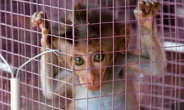 SIGN: Ban Cruel Pet Monkey Captivity in the UK