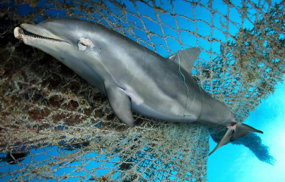 SIGN: Ban Fishing Gillnets That Slowly Suffocate Helpless Dolphins and Whales