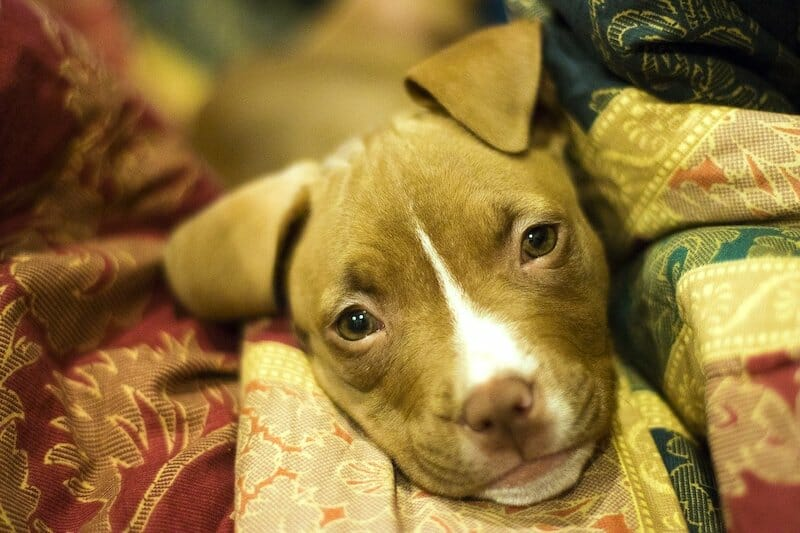 SIGN: Justice for Puppy With Neck Broken, Dumped In Garbage