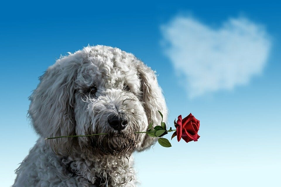 Send Us Your Companion Animal Stories for 'Love Your Pet' Day!
