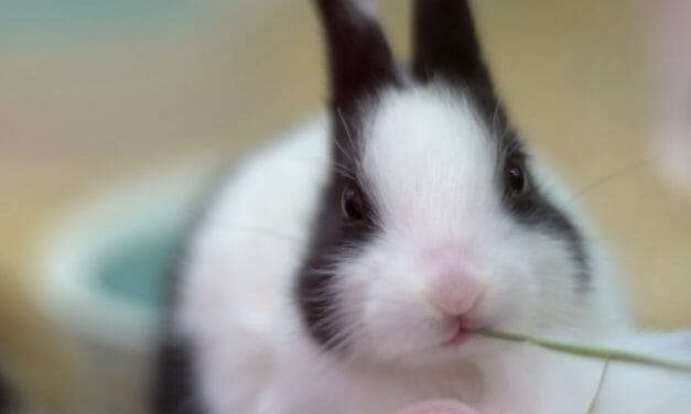 UPDATE: Virginia Becomes 4th State to Outlaw Animal-Tested Cosmetics