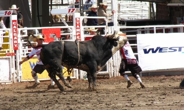 Los Angeles Becomes First City to Ban 'Tools of Torture' at Rodeos