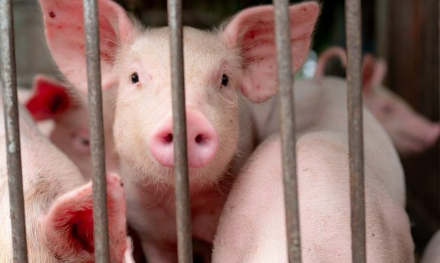 SIGN: End the Nightmare for Animals on America's Factory Farms