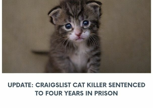 craigslist cat killer
