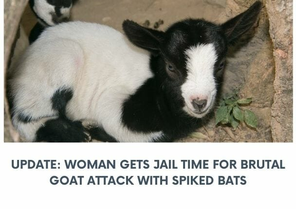 goat attacker jailed