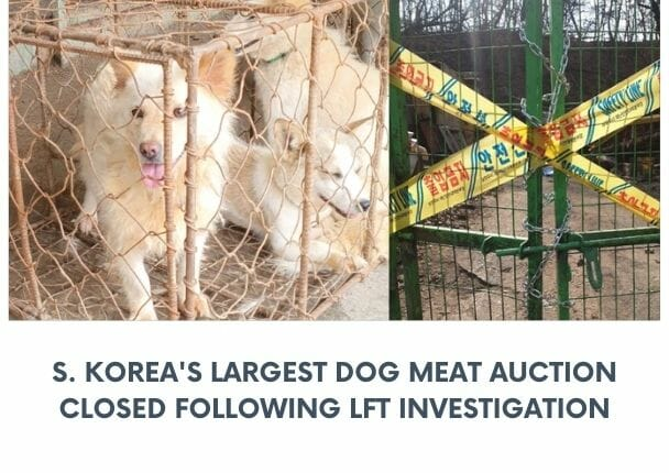 nakwon dog meat auction house closed