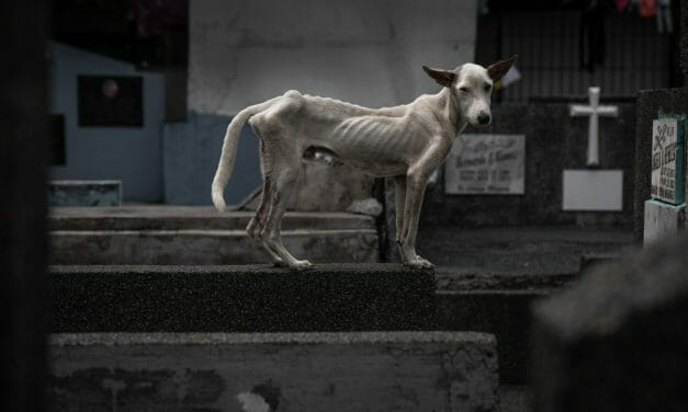 Lady Freethinker Project Shines Spotlight On Pups and People Living in Public Cemeteries in the Philippines