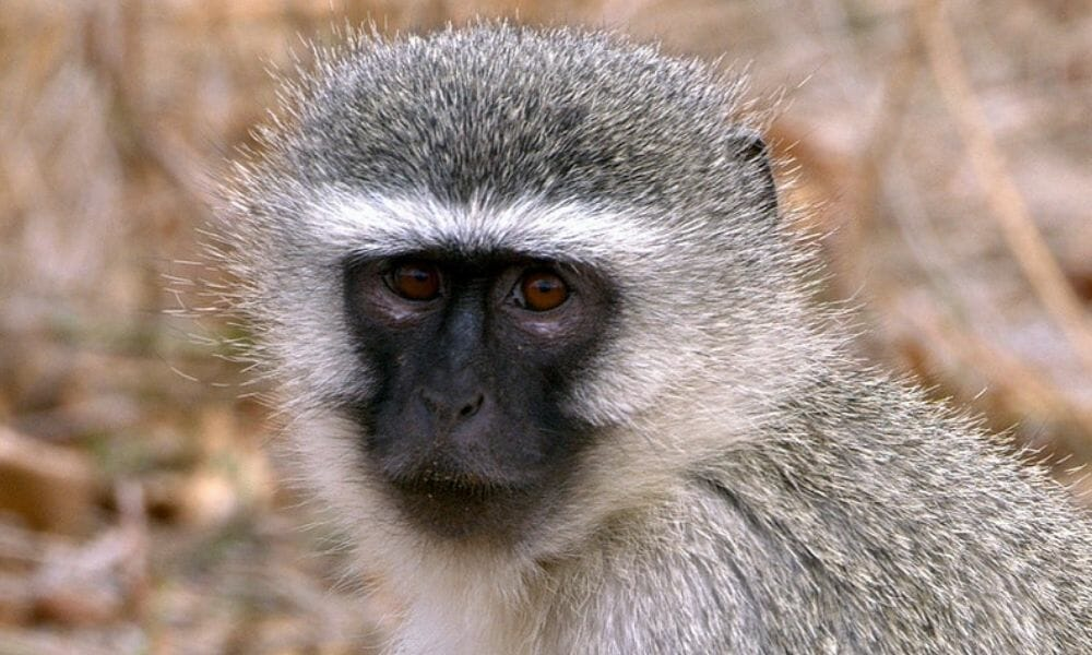 SIGN: Justice for Poisoned Monkeys Who Died Convulsing in Pain