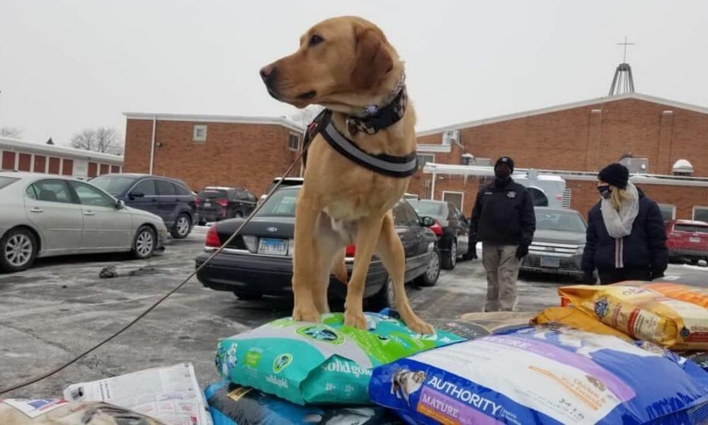 Chicago Sheriff's Office Hosts Drive-Thru Food Pantry for Dogs in Need