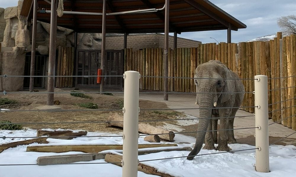 10 Worst Zoos for Elephants Exposed In Shocking New Report